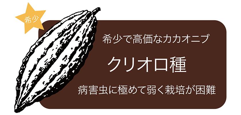 希少 希少で高価なカカオニブ クリオロ種 病害虫に極めて弱く栽培が困難
